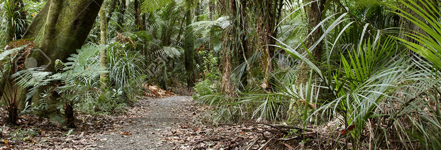 Une végétation tropicale
